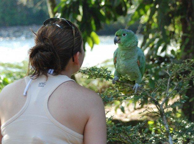 Parrots in Ecuador's Amazon