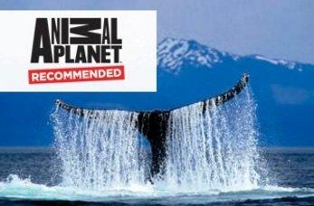 juneau mendenhall whale quest