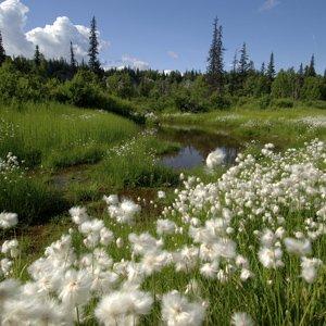 Alaska-Globus-Denali-National-Park-scenery