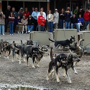 Alaska-excursion-Denali-sled-dog-kennel-tour-Globus