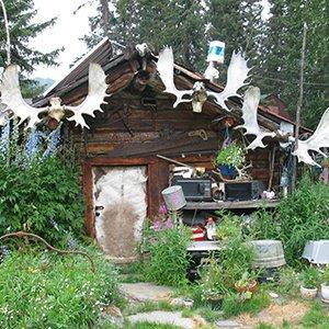 Alaska-excursion-Fairbanks-Arctic-Circle-air-adventure-Globus