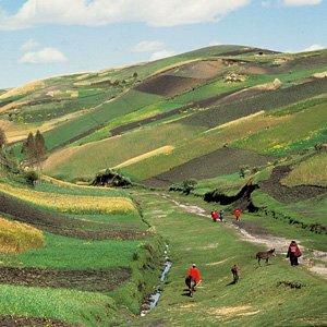 Ecuador-Andes-hillside-crops-Cosmos