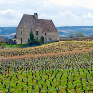 France-Beaune-fields-Globus