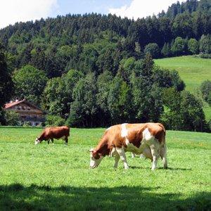 Tuesday, November 6Black Forest & Colmar, Germany